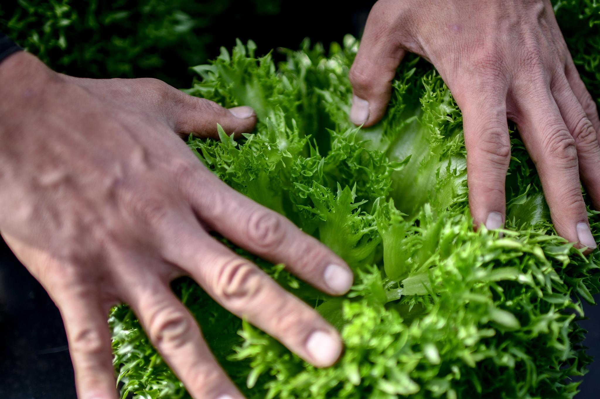富士山麓の季節の野菜「詰め合わせ」選べるサイズ