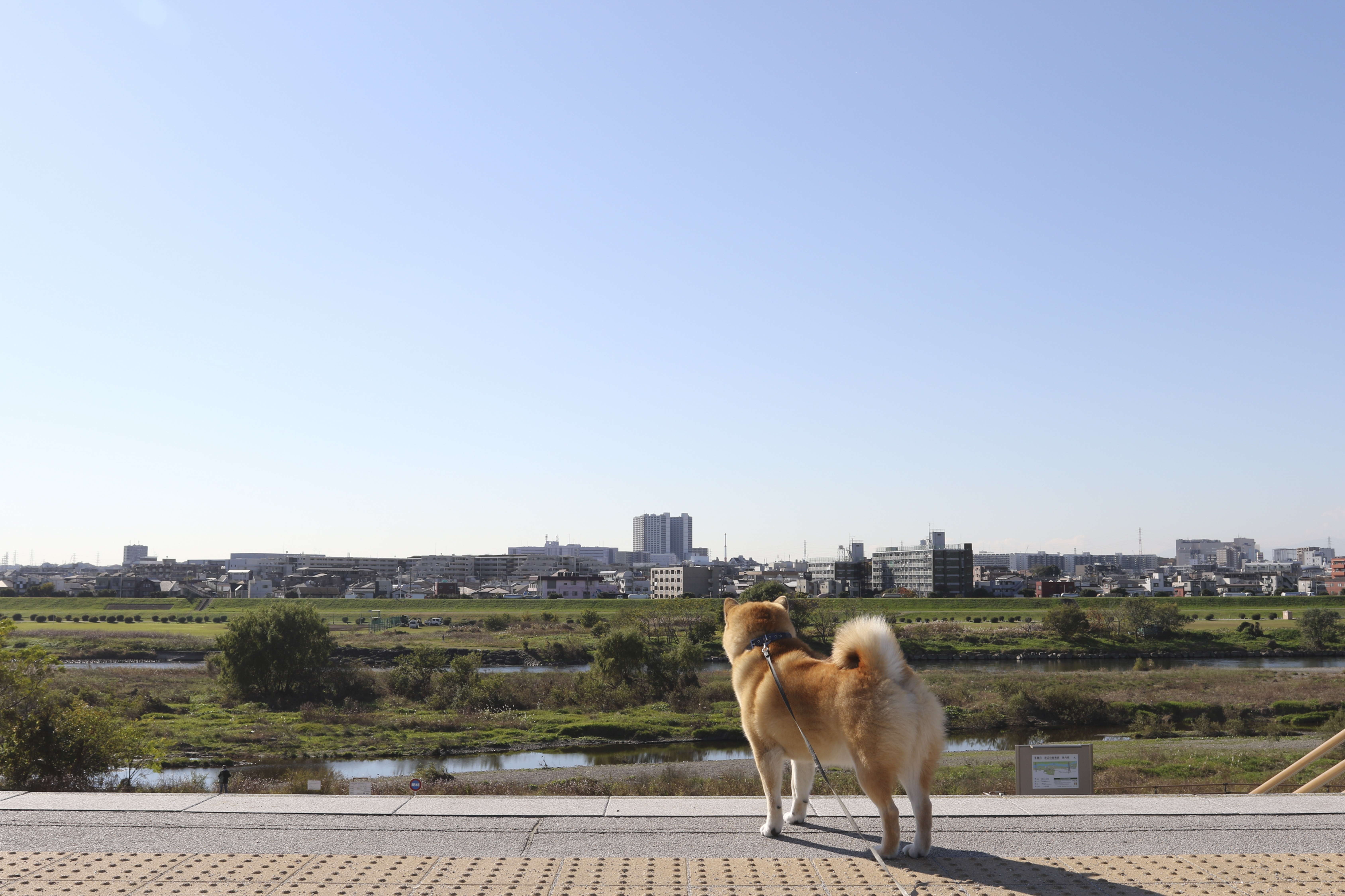 A3ノビ写真 「いい眺めだよー散歩編ー」