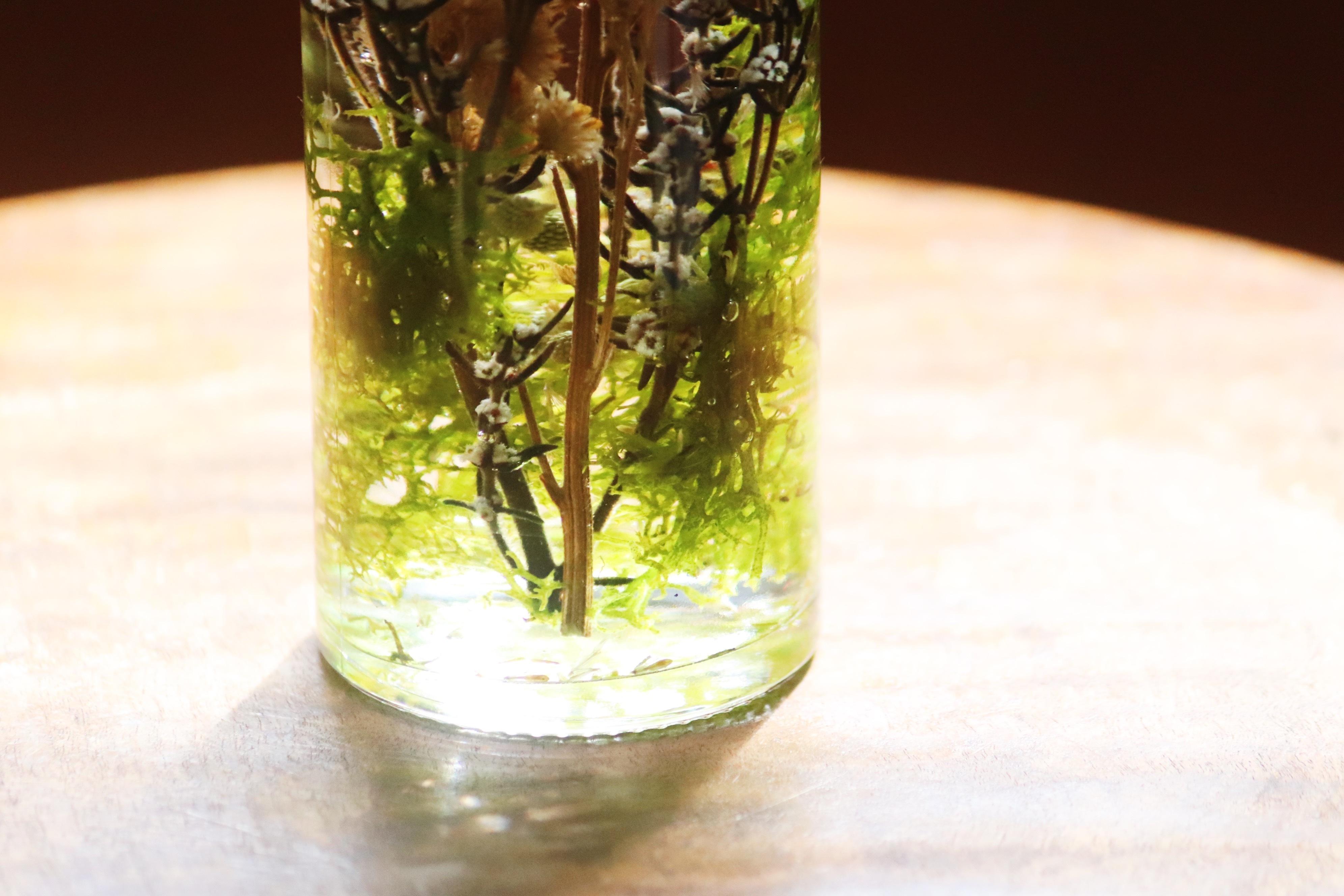 Herbarium9