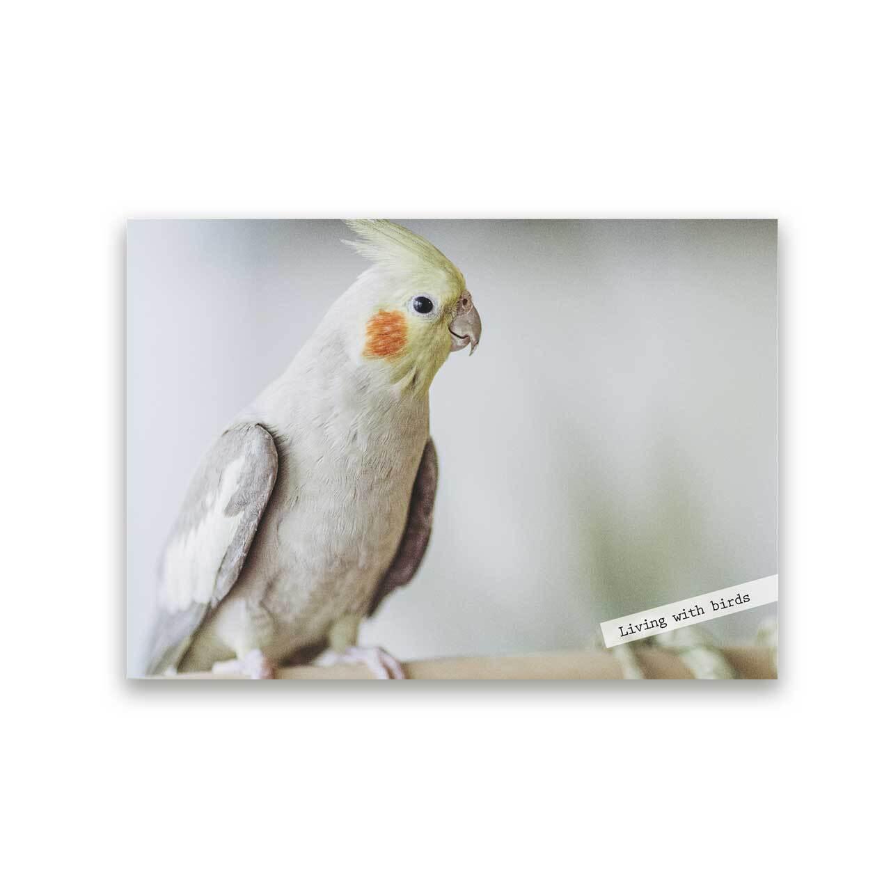 好きな写真でつくるフォトポスター「1shot bird」(横)