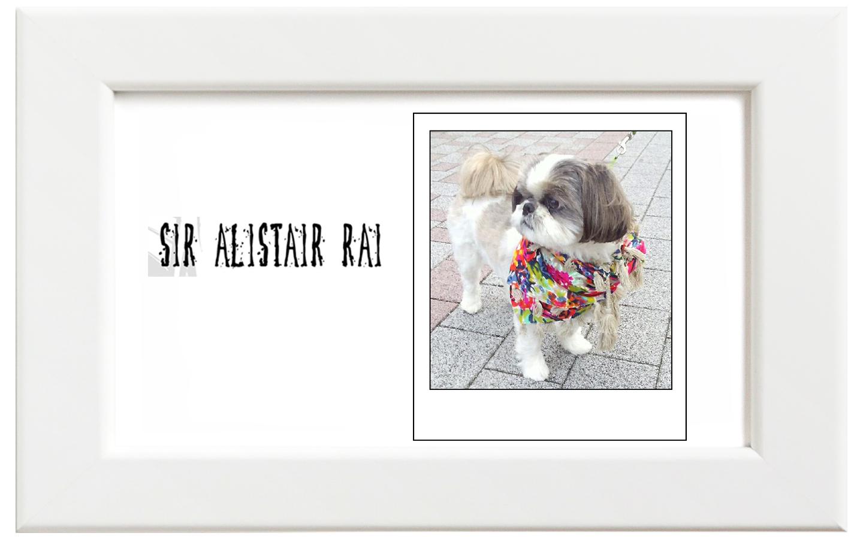 Sir Alistair Rai/サー・アリステア・レイ Floral キッズ&愛犬用スカーフ
