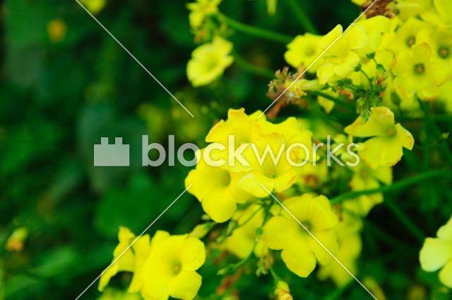 写真素材:春の花003 - 画像1