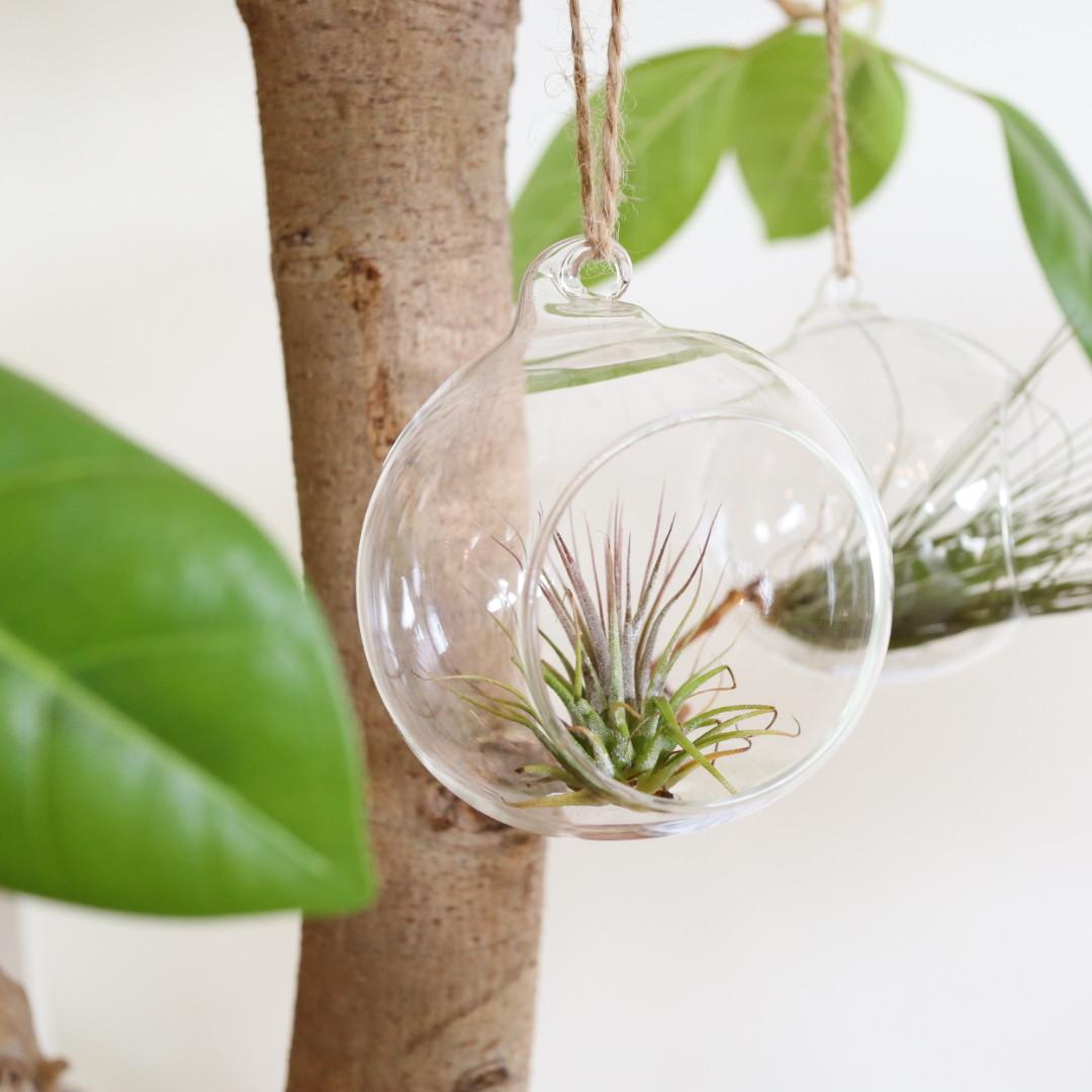 ハンギングガラス