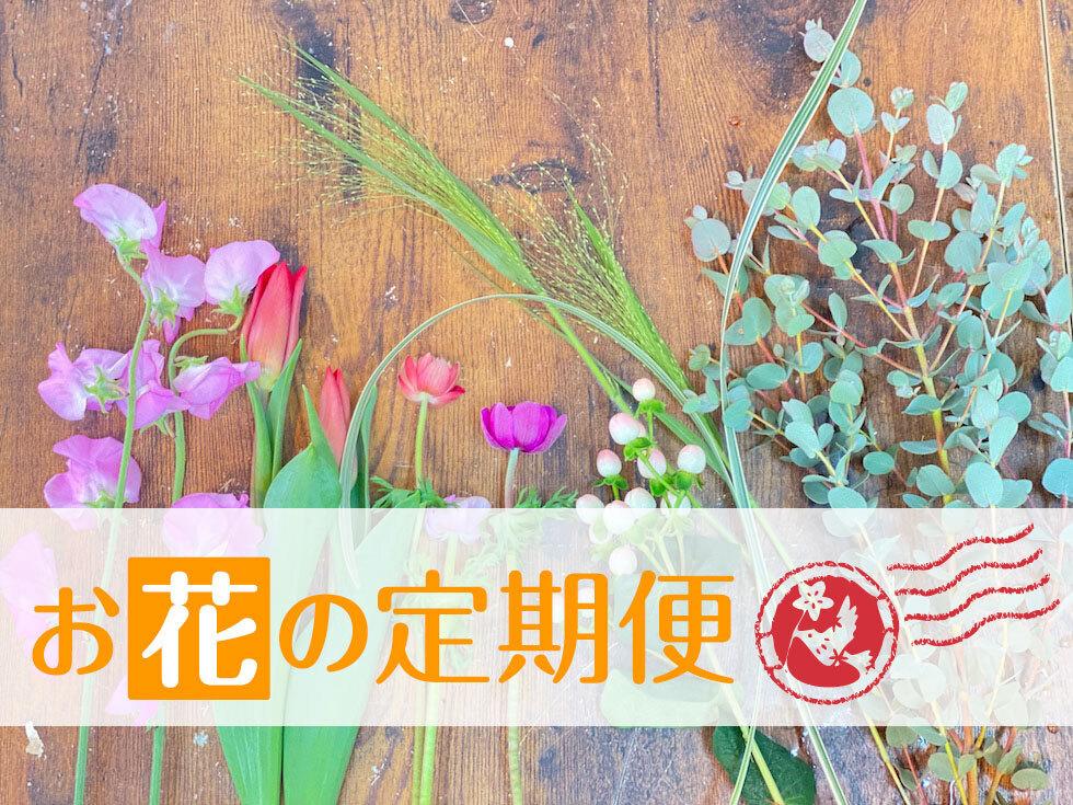 敬老の日/季節のお花定期便 半年 [ 配送料込]