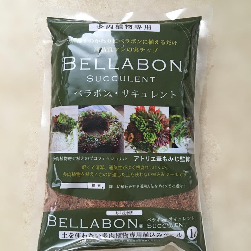 【ベラボンサキュレント】多肉植物ギャザリング寄せ植え用1リットル - 画像1