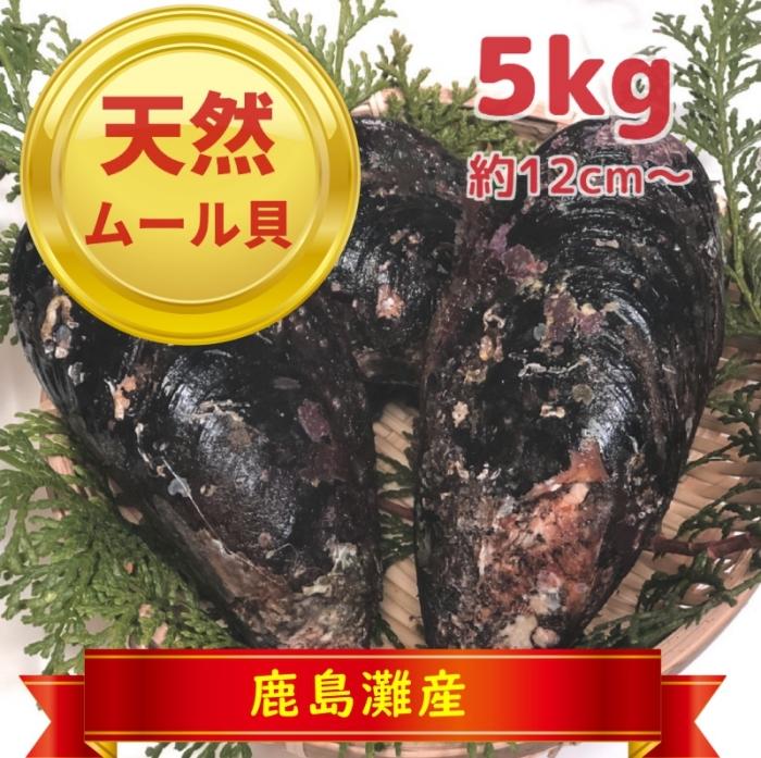 天然ムール貝5kg(鹿島灘産)【季節限定:おおよそ10月~3月まで】