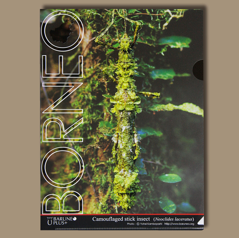 ボルネオ擬態クリアファイル 苔に似たナナフシ