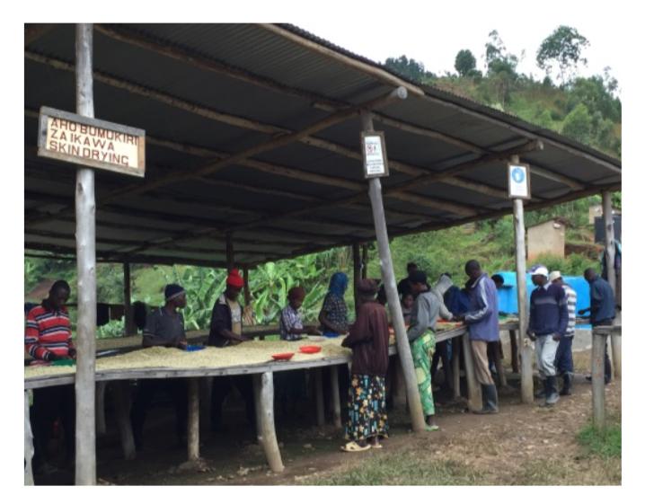 【200g】ルワンダ カンズ Rwanda kanzu washing station