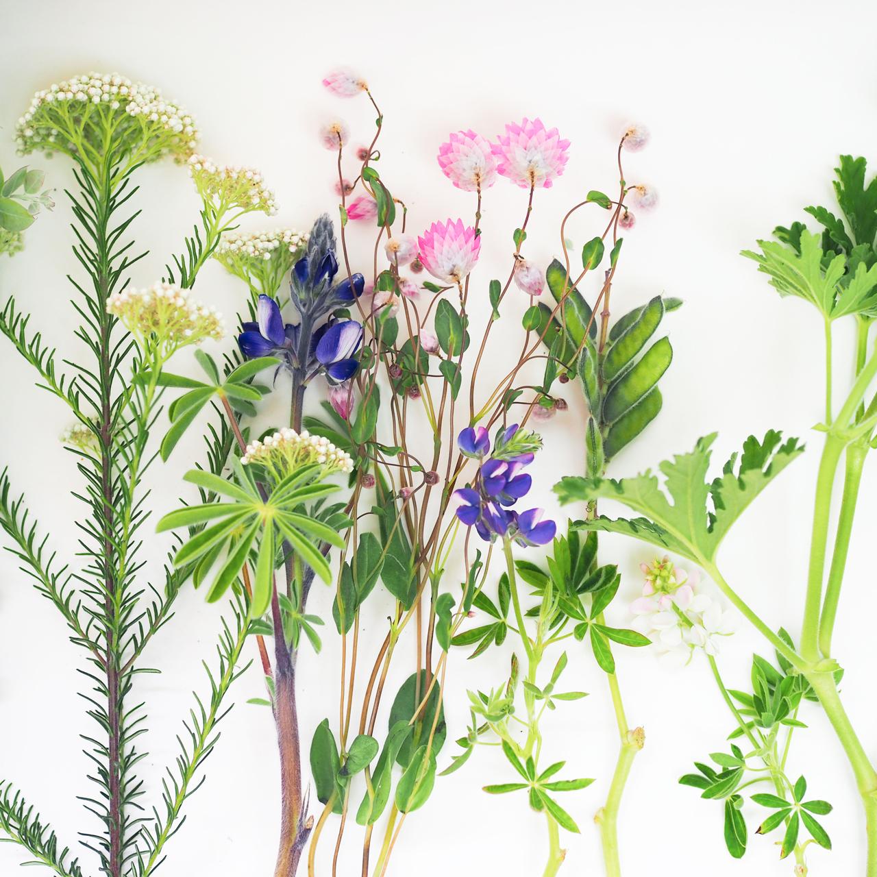【生産地直送】有名生産地から季節の個性派草花ミックス 1ケース(30〜60本入り)