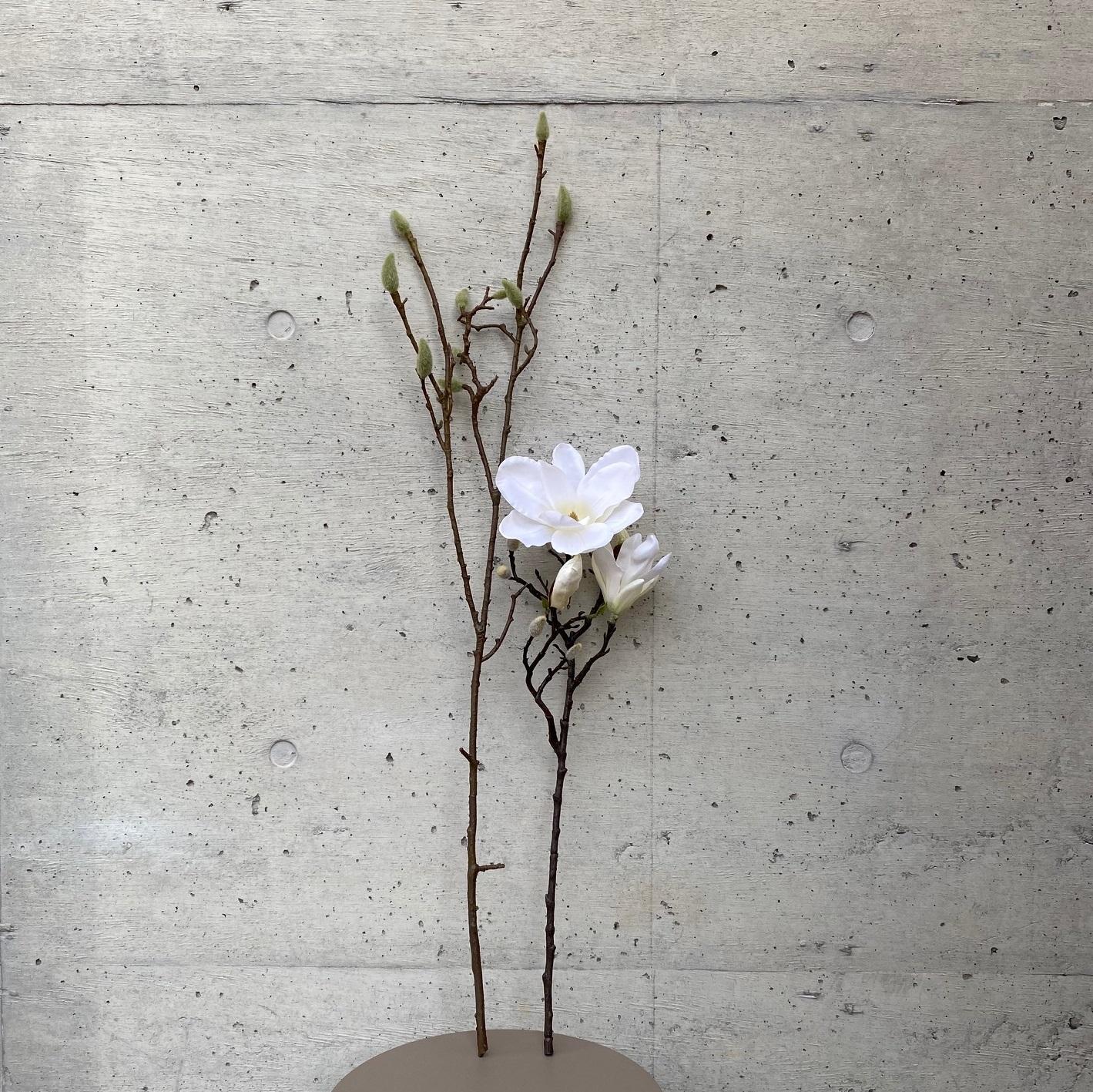 Magnolia モクレン(ホワイト)