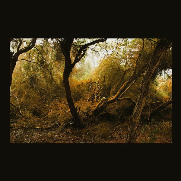 Fallen Trees | Lubomyr Melnyk