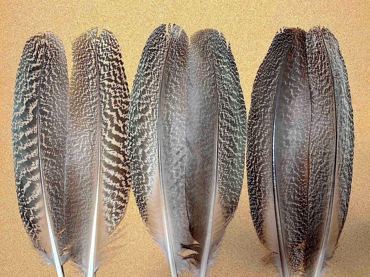 PEACOCK SPECKLED QUILLS