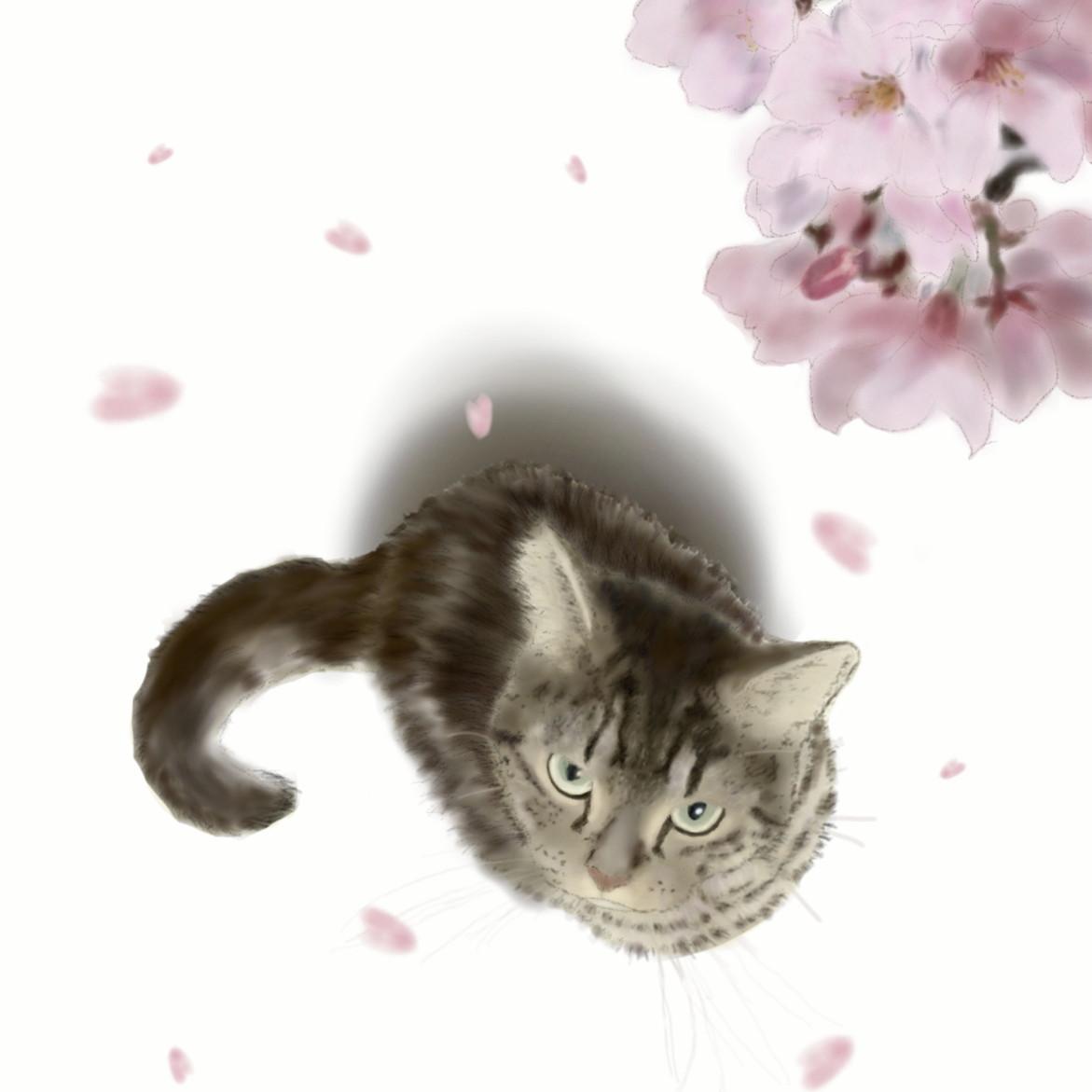 絵画 インテリア アートパネル 雑貨 壁掛け 置物 おしゃれ 猫 動物 桜 デジタルアート ロココロ 画家 : rune 作品 : 桜と猫