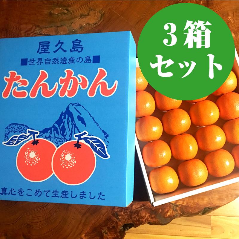 【お得な3箱セット】屋久島たんかん Lサイズ 「秀」3kg【送料無料】
