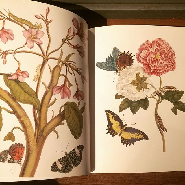 画集「Botanicals: Butterflies & Insects」 - 画像3