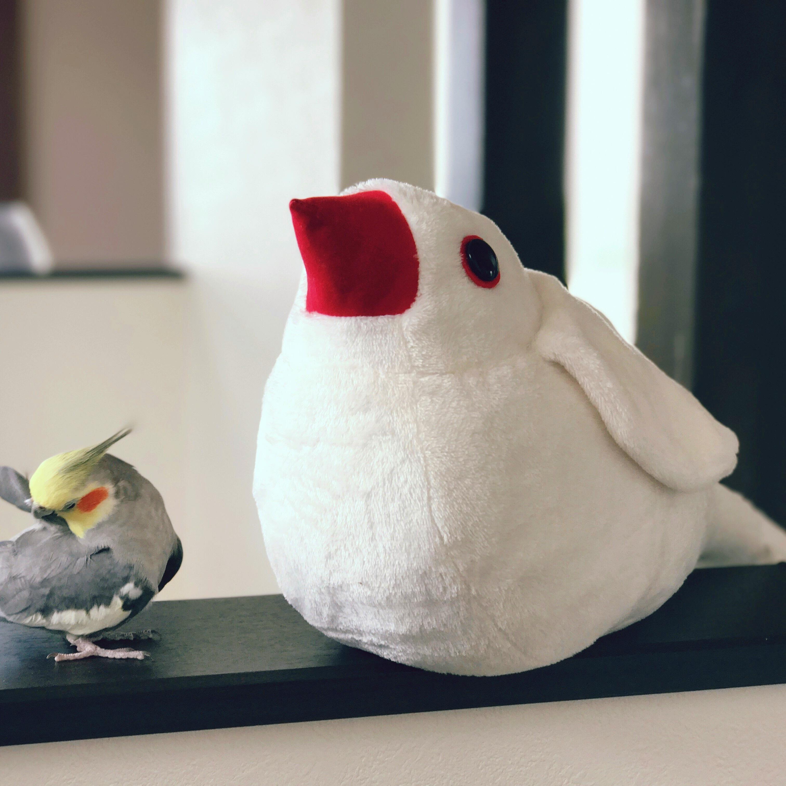 グッズ 文鳥