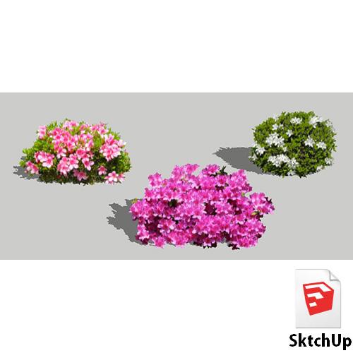 樹木SketchUp 4t_014 - 画像1