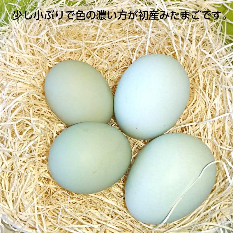 【送料無料】初産み卵 緑の一番星(30個)