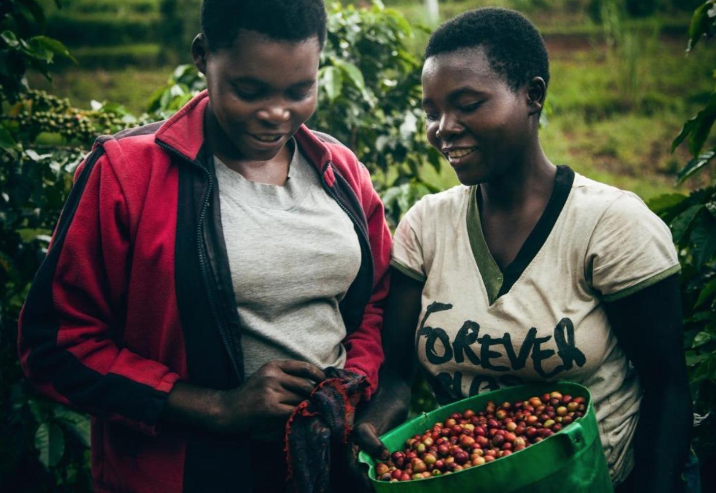 弾ける果実感とチョコレートのような風味 Rwanda Gitesi #7 100g Light roast