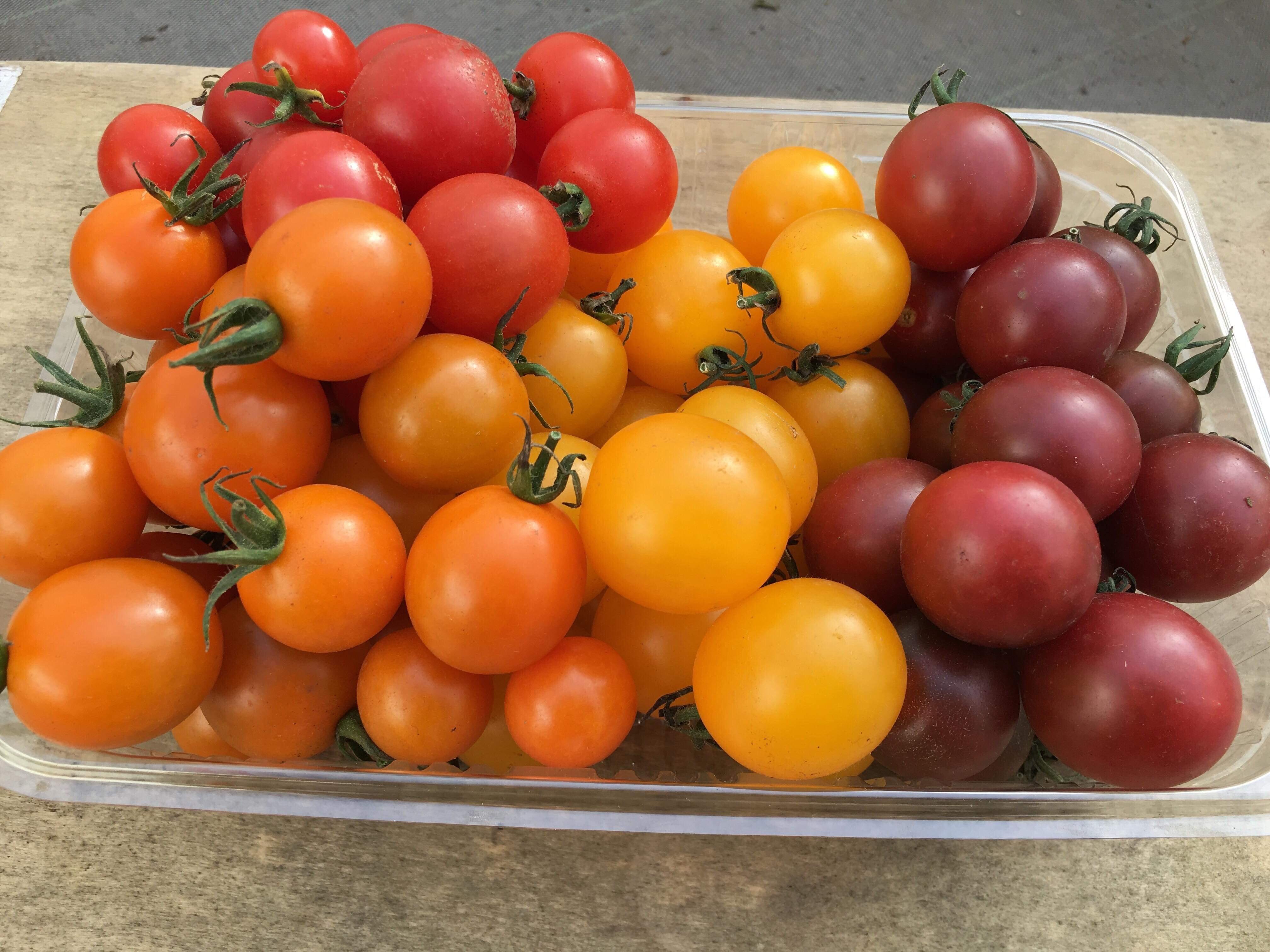 有機無農薬栽培 カラフルミニトマトShiki 1kg ササベジ  送料無料
