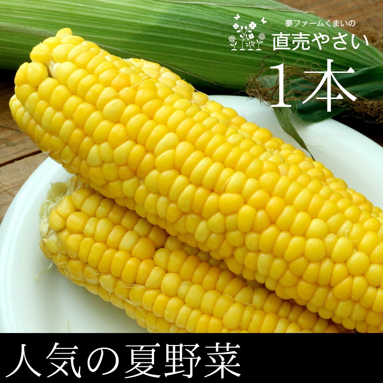 とうもろこし 人気の夏野菜 1本 予約販売 7月中旬発送 新潟阿賀野産 朝採り 直売野菜