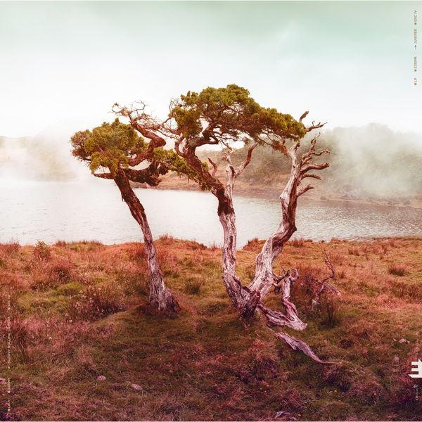 Juniper | Slowly Rolling Camera