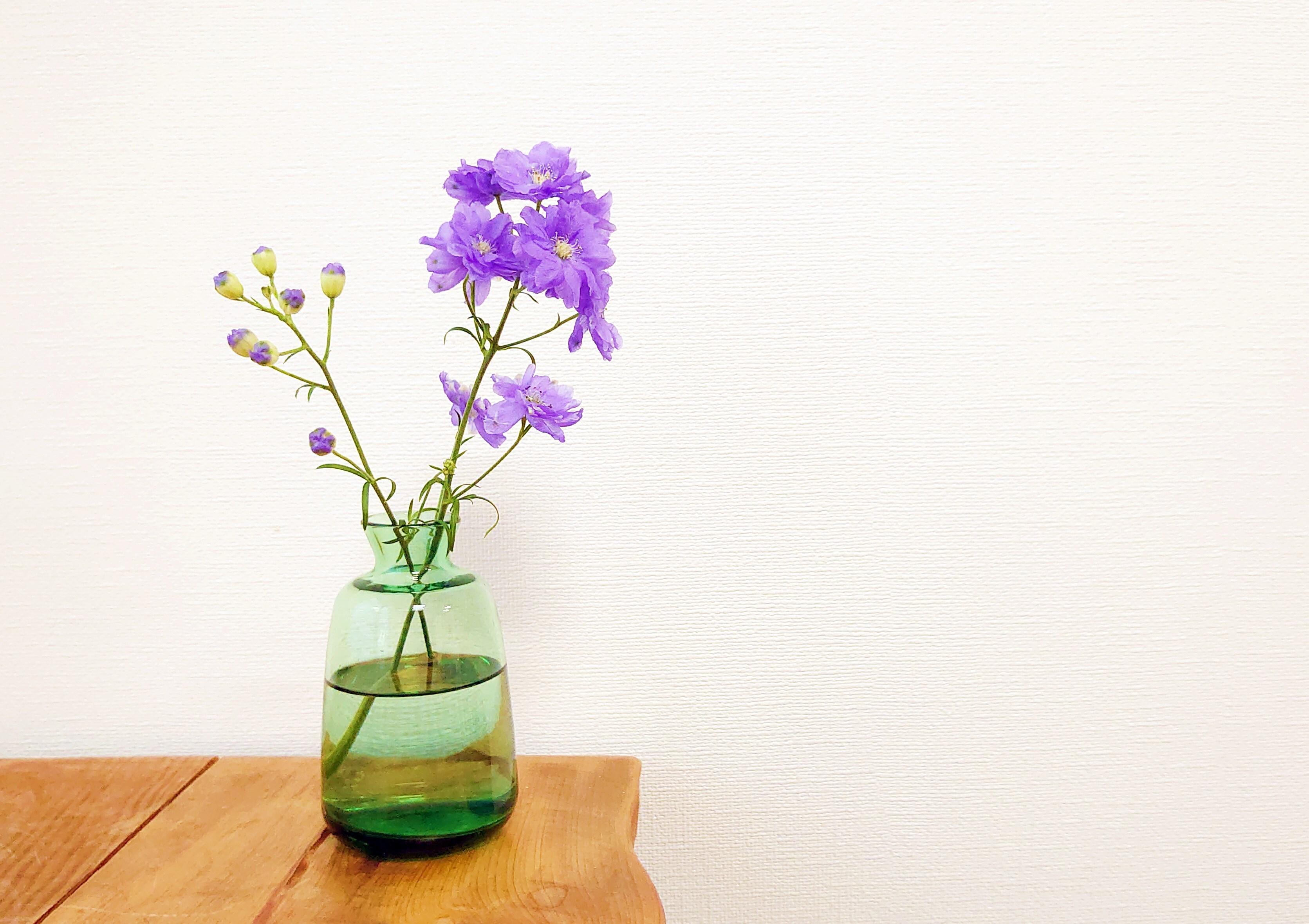 Amelie Glass アメリーグラス C-GR