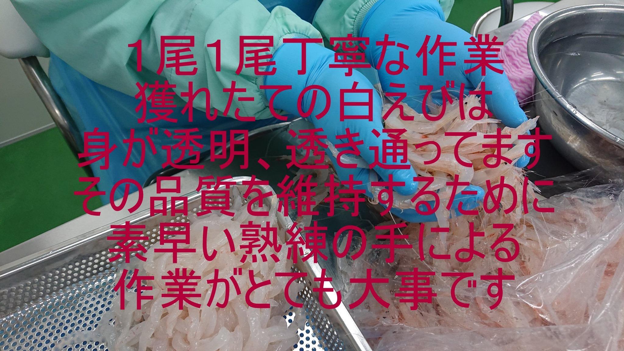 【一般のお客様大歓迎】231 富山湾産白えび刺身(冷凍) ミシュラン星付店御用達 最高級手剥き品  業務用200gP
