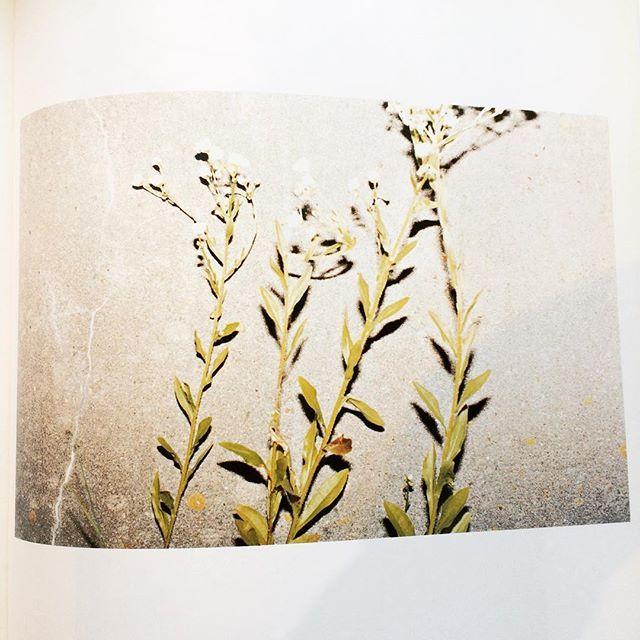 写真集「Nurnberg/Juergen Teller」 - 画像3