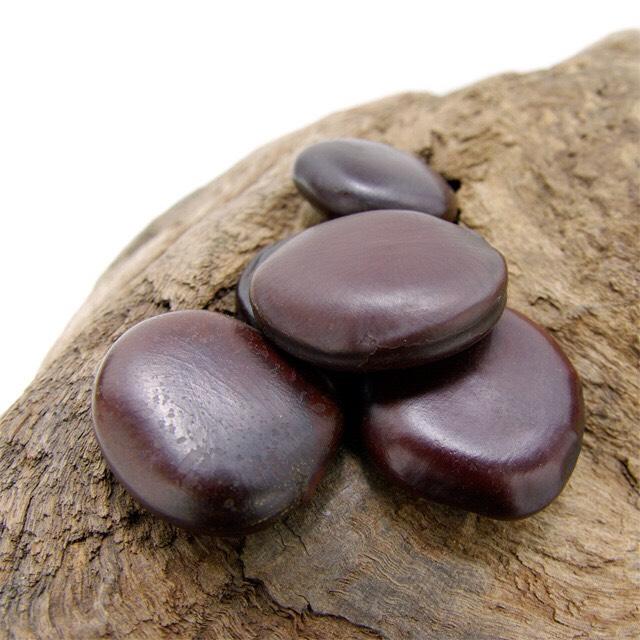 モダマの豆(M)