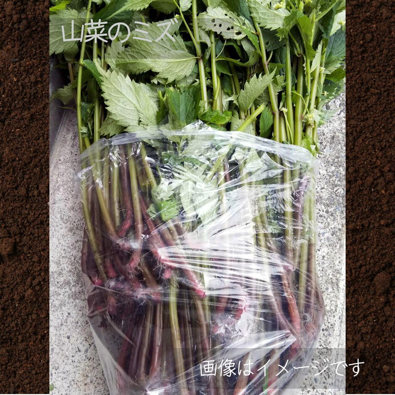 ミズ 1束 : 6月朝採り直売野菜 6月15日発送予定