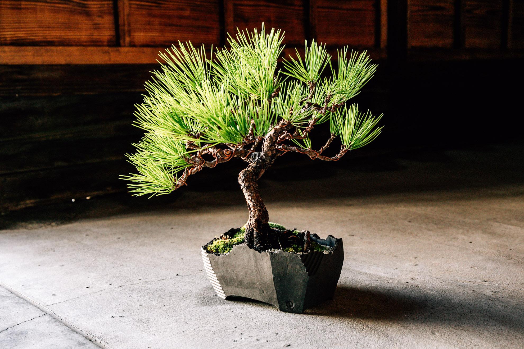 澪標-bonsai pot- / M / Rich Black