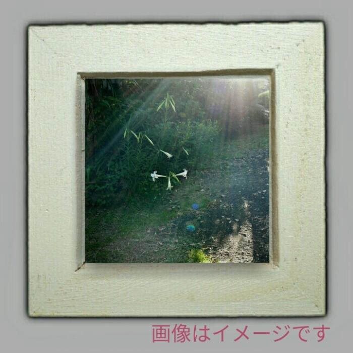 「朝の百合」(複製画)◆ミニ額