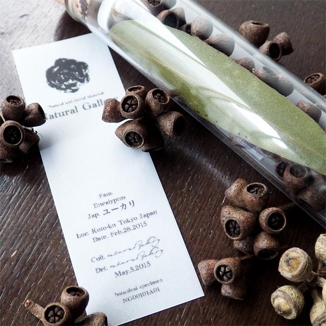 "Seed mania bottle ""Eucalyptus"""