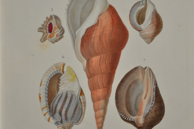 図版3(貝類1)