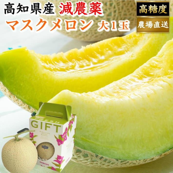贈答用 高級 マスクメロン 大玉(約1,5kg) お取り寄せ ギフト フルーツ 果物 高知県産 送料無料