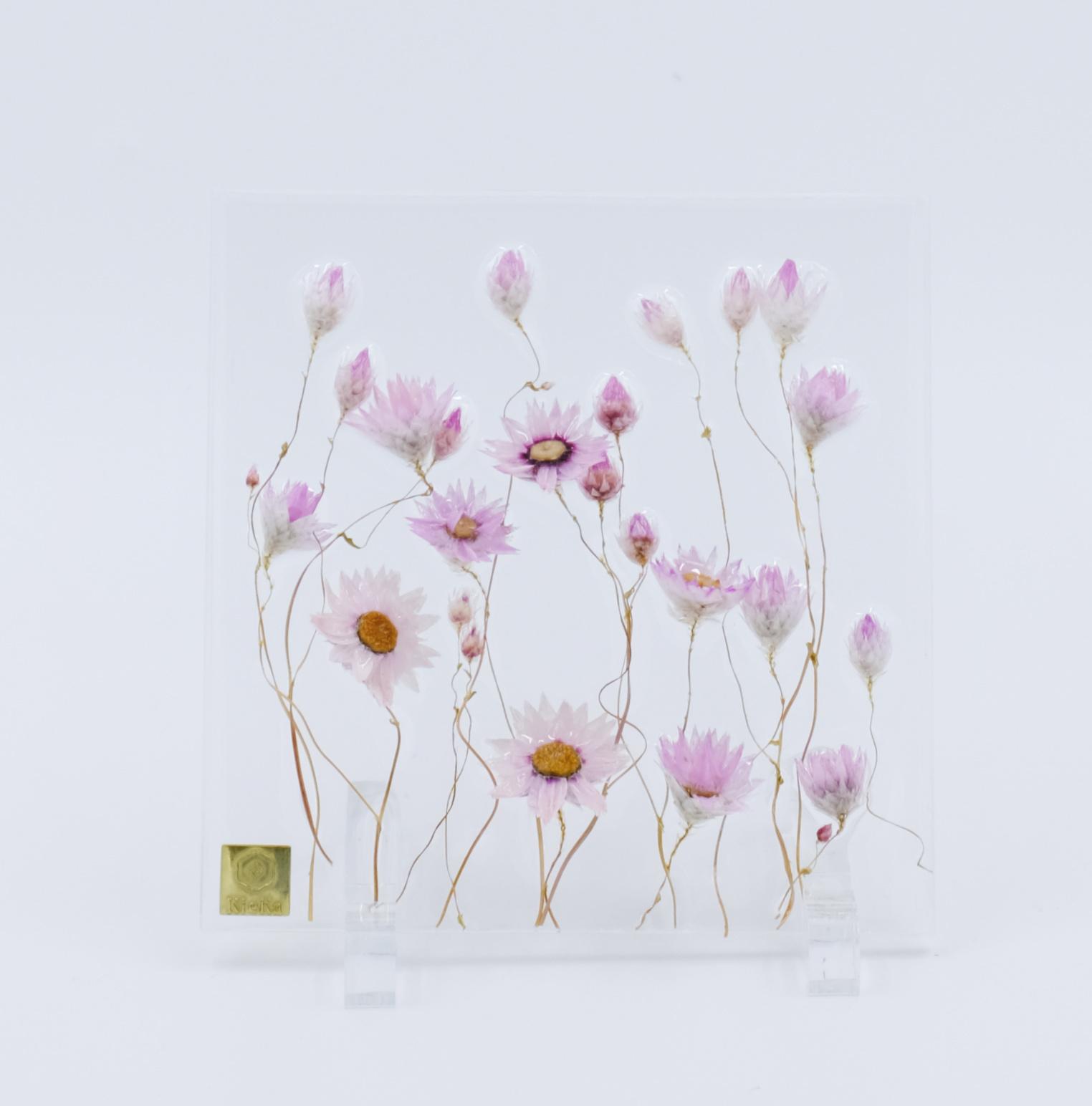 dried flower square ローダンセ