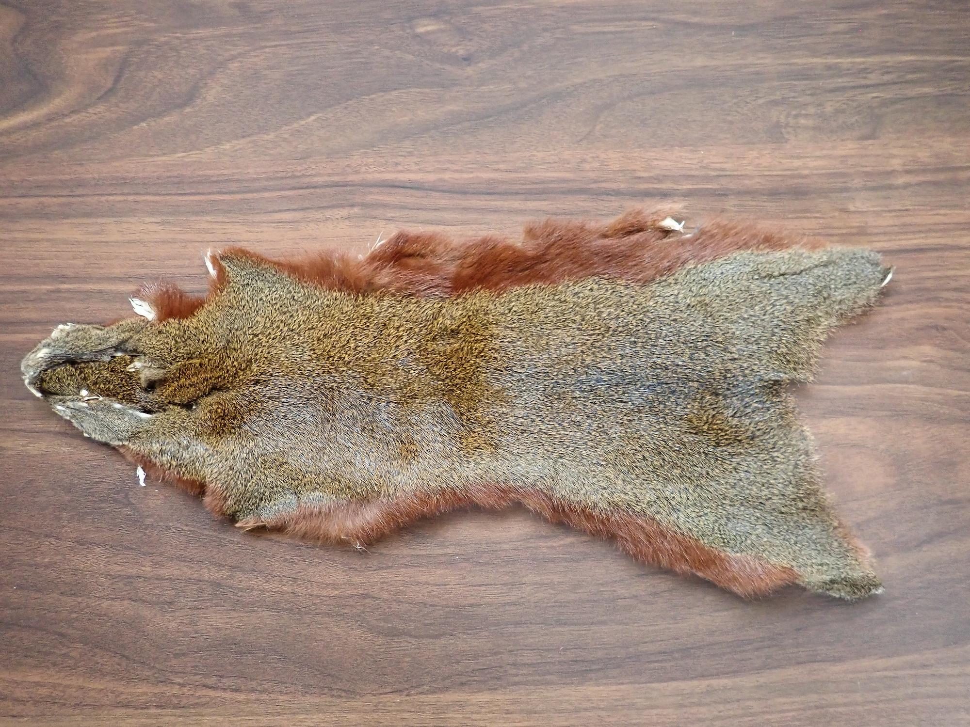 Pine Squirrel Whole Skin / パインスクイレル