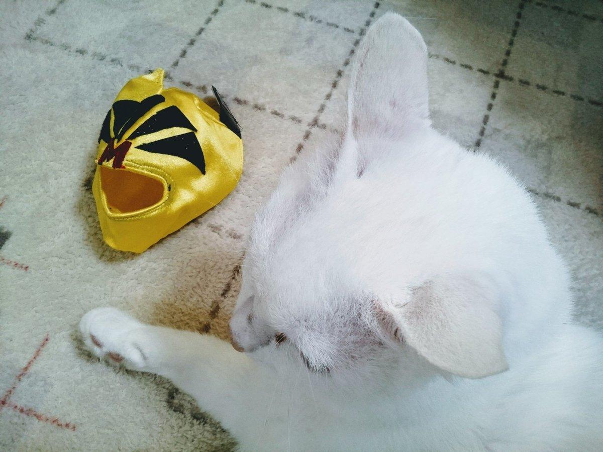 #猫の目薬用 #点眼マスク #覆面 #点眼補助具 #目だしマスク [ノーマル版]