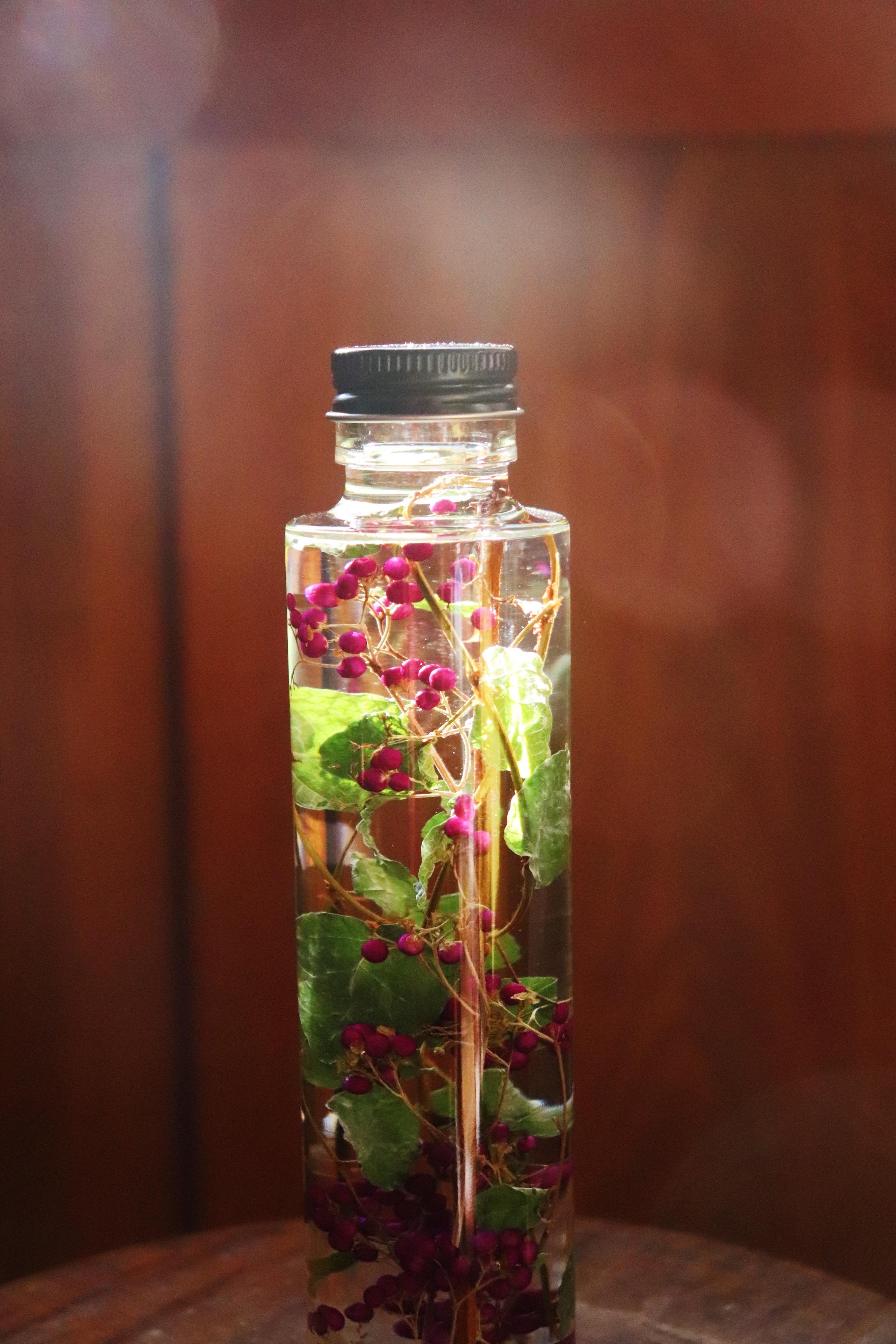 Herbarium19