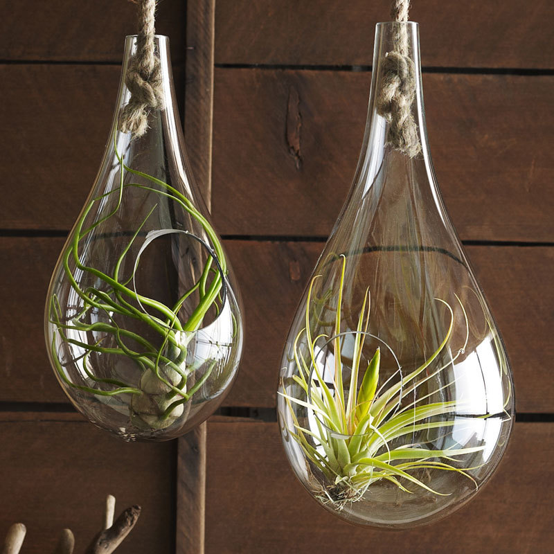 Roost Recycled Glass Bubble Hanging Terrarium ハンギングバブルテラリウムS&M 2個1セット