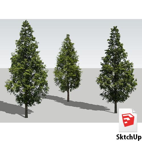 樹木SketchUp 4t_007 - 画像1