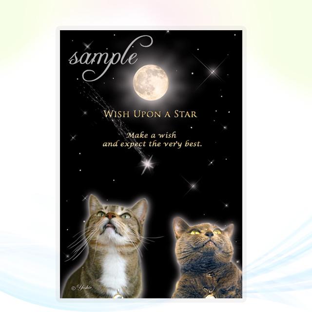 Wish Upon a Star/ch.003L・メッセージカード