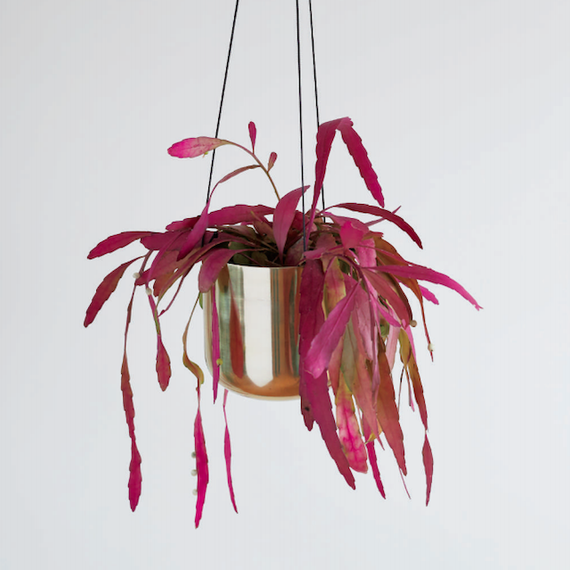 Raakel Hanging pot / Gold φ17cm×H17cm ハンギングプランター・鉢カバー