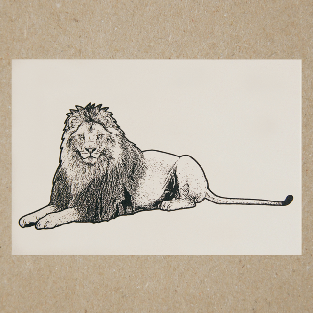 ポストカード(ライオン)