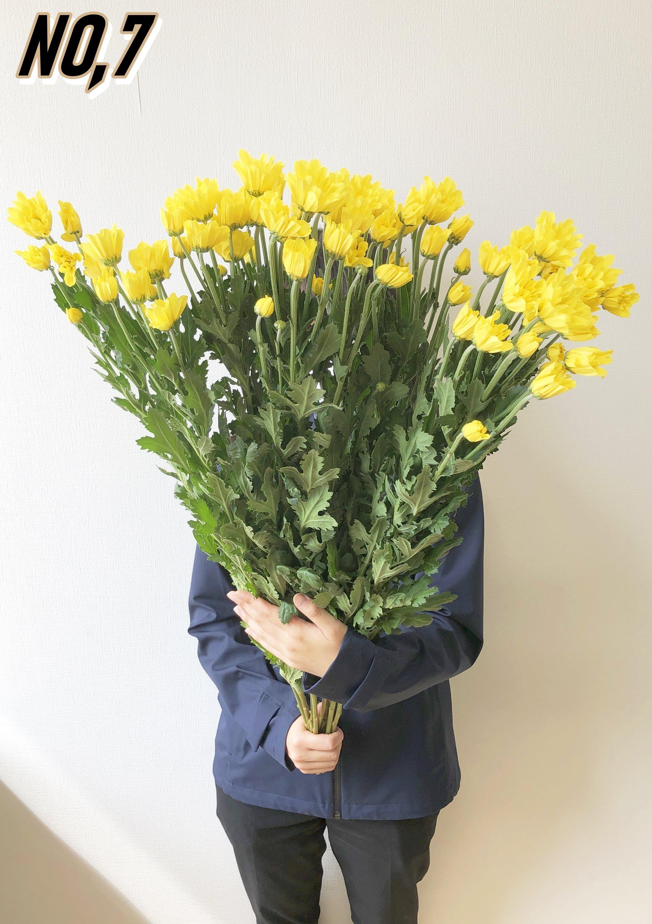 ★送料無料 お墓参りへ行こう!国産お供え花シェアBOX30 №4【ロスフラワー救済!】
