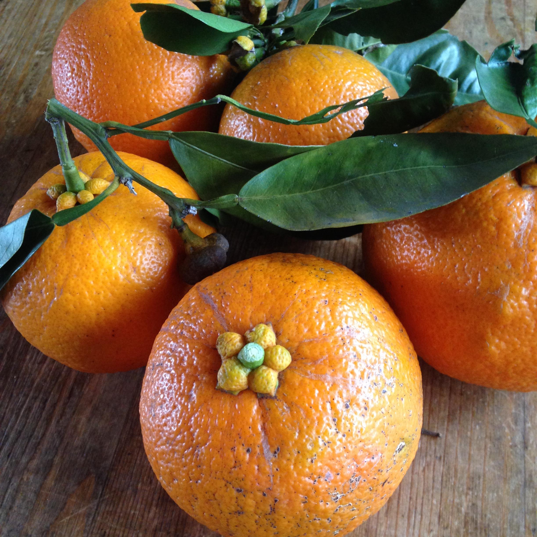 橙とココナッツのマーマレード - 画像3