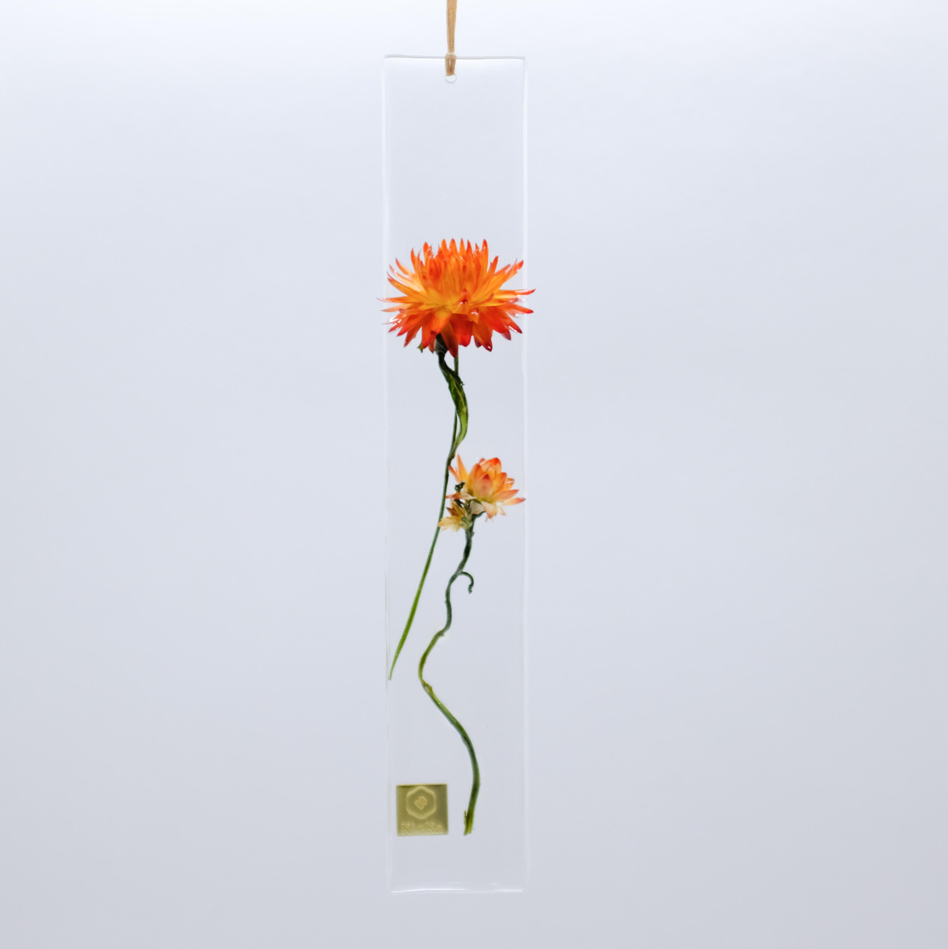 dried flower S ヘリクリサム オレンジ系