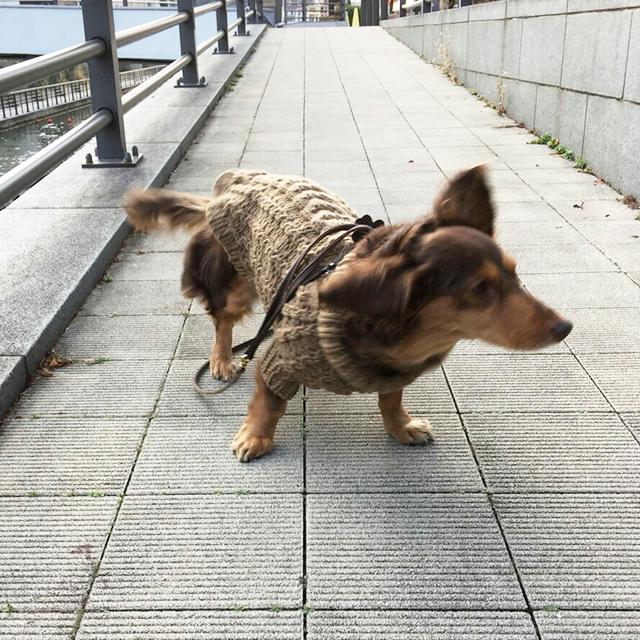犬のためのオーダー服(小型)