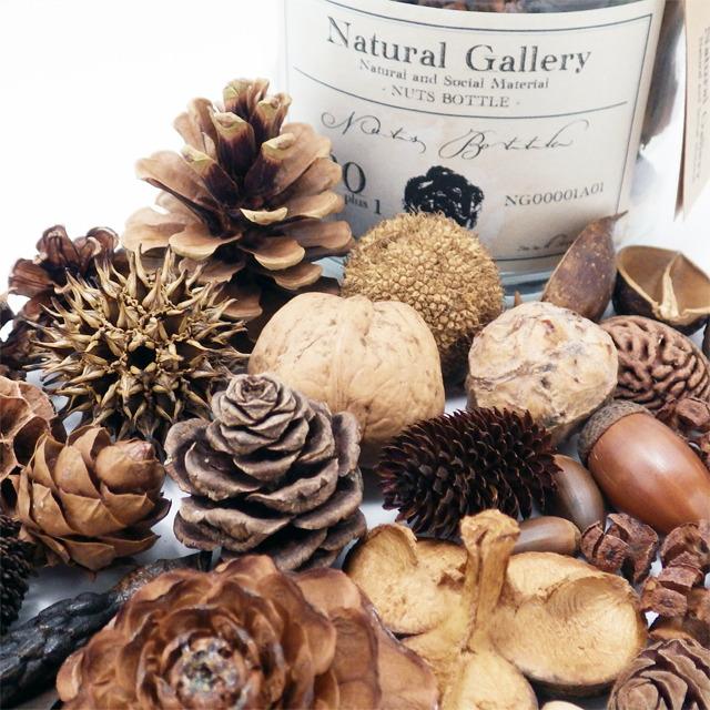 ナッツボトル・30種類の木の実の標本(再販)